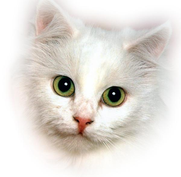 Киса белая.png